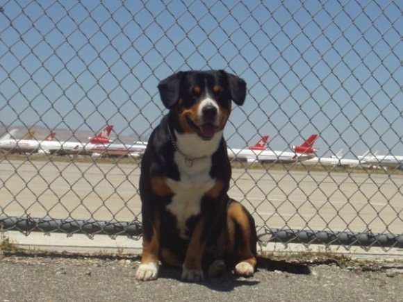 Swissair mascot Maximilian...arrived via SR 747