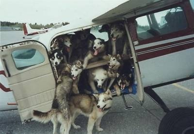 Doggie Airlines...