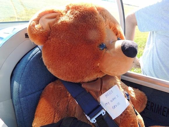 Back seat bear